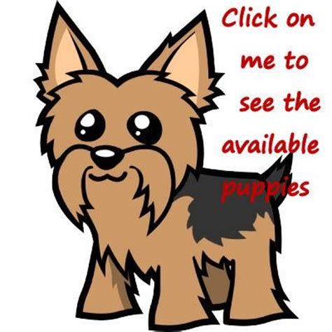 nc yorkie breeders puppys free clip free clip on clipart library