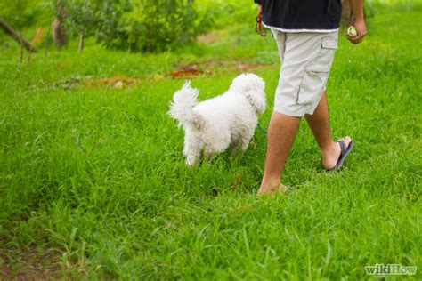 what age to start leash a puppy how to leash a puppy 7 steps with pictures wikihow
