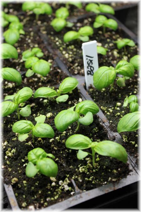 john scheepers kitchen garden seeds