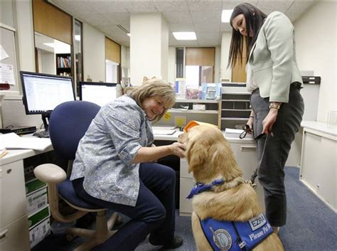 comfort pets law comfort canine joins lucas county prosecutor s office