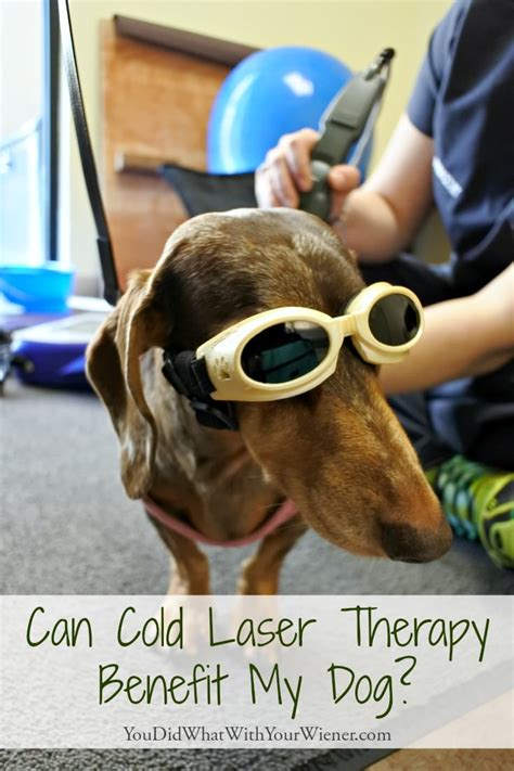 cold laser therapy for dogs can cold laser therapy benefit my