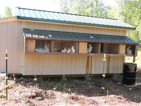 Rabbit Shed Ideas by Shed With Rabbit Cages On The Outside And Rabbit Housing Nest Boxes On The Inside Set