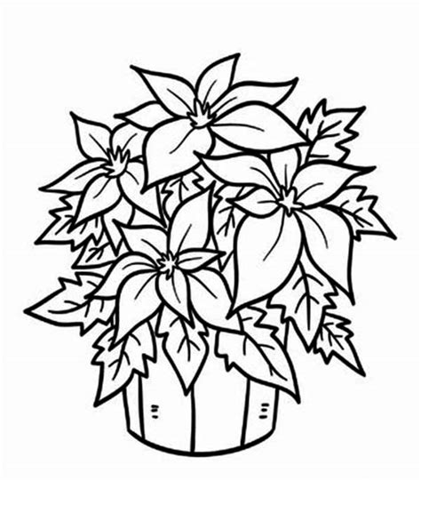 Poinsettia Coloring Pages Happy Holidays Poinsettia Coloring Page