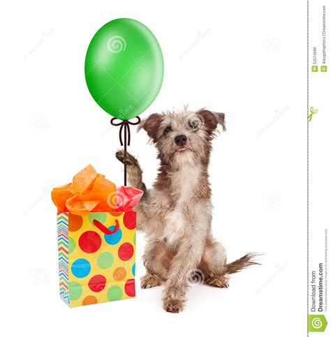 puppy balloons holding balloon with gift stock photo image 52574699