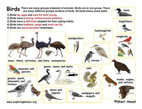 class birds aves k 3