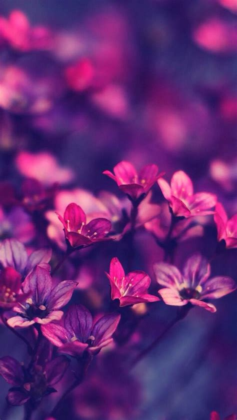 wallpaper iphone flower hd 257 best wallpapers images on pinterest background