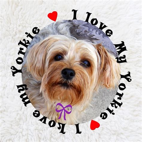 how is my yorkie i my yorkie free stock photos in jpeg jpg 1920x1920 format for free
