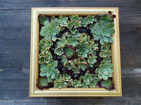 Succulent Wall Art How To Make A Succulent Wall Garden
