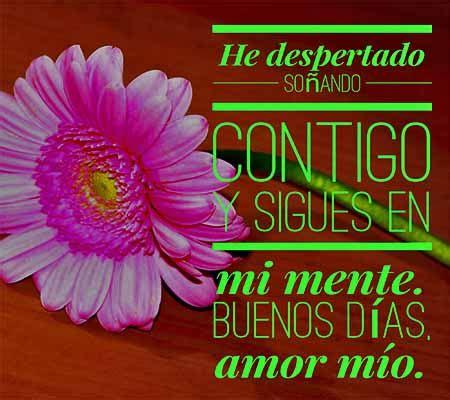 imagenes de buenos dias amor con flores imagenes de rosas con frases de buenos dias amor rosas