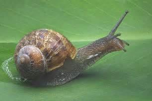 naturality caracoles moluscos bivalvos