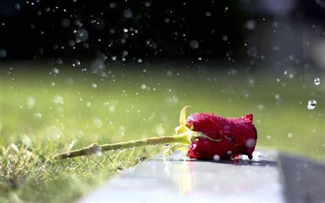 background hujan romantisme hujan akan seketika hilang karena 5 hal ini
