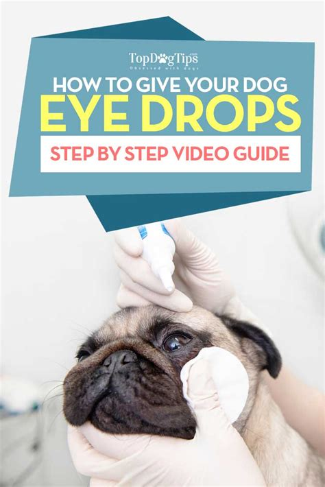 how to give a puppy a how to give a eye drops a step by step
