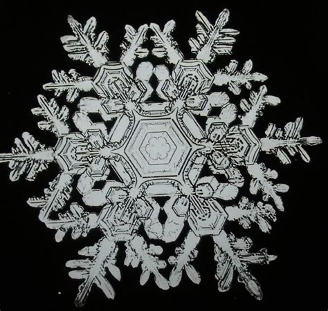 snowflake bentley camera best 25 real snowflakes ideas on pinterest snowflake