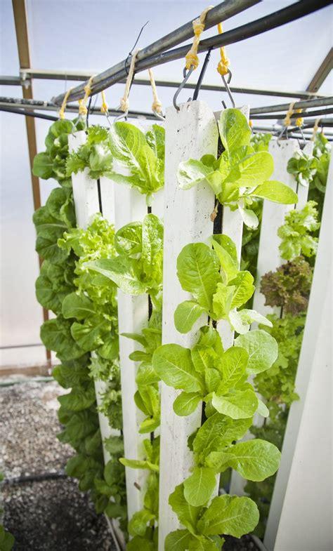 vertical farm  greenhouse stock photo freeimagescom