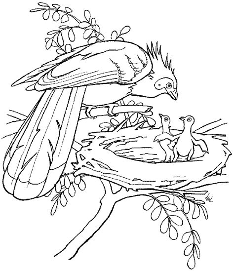 realistic tropical bird coloring coloring pages