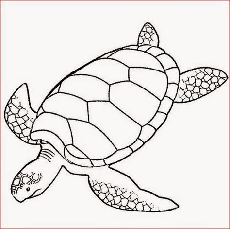 coloring pages of baby turtles free coloring pages of baby sea turtles