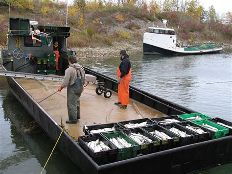 commercial fishing boat definition nc officials debate definition of commercial fisherman