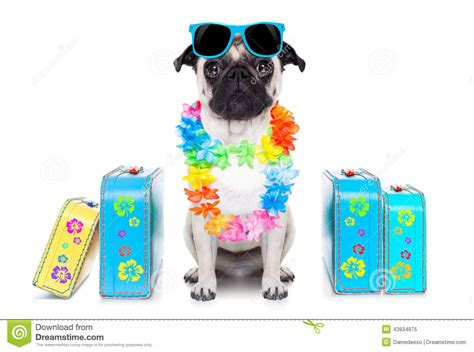 Vacation Pet Pet Pet Product by Summer Vacation Stock Image Image Of Silly Hawaiian
