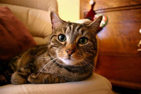 minicuentos de gatos y 11 curiosos datos que no sab 237 as sobre los gatos 161 no creer 225 s el 6