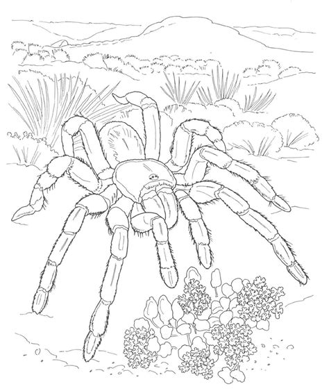 desert coloring pages desert coloring page coloring home