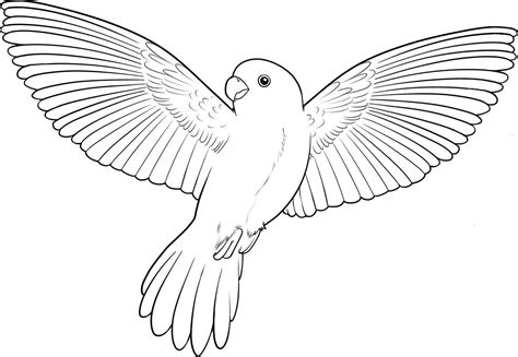 coloring pages of birds flying colouring pages of flying parrot www pixshark com
