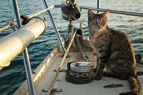 living on a boat with cat sailing cat enjoys 9 lives on the 7 seas adventure cats