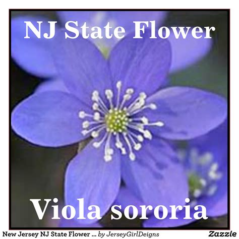 state flower of new jersey image gallery new jersey state flower
