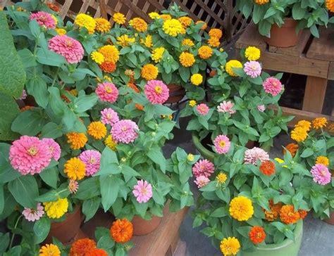 da vaso fiori da vaso fiorista fiori per vaso