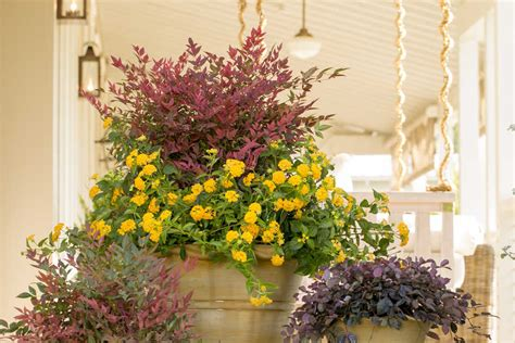 southern living container gardening container gardening tips indoors outdoors southern