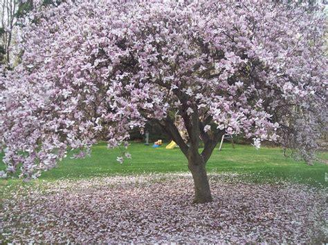 steel magnolias senior project robert harling