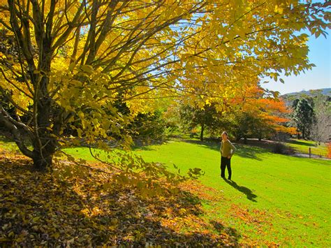 Mount Tomah Botanic Garden Where To See The Best Autumn Tree Displays In The Blue Mountains Sydney
