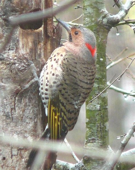 garden and yard how to keep woodpeckers from damaging