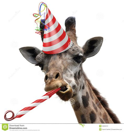 Giraffe Hat Meme - funny giraffe party animal making a silly face and blowing