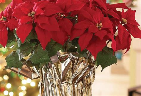 how to make a poinsettia centerpiece at the home depot