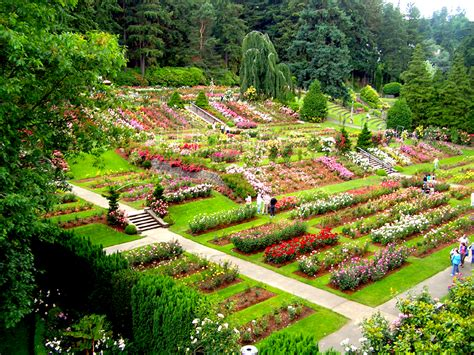 Garden International Pdx Flashalert News 100 Years Of Roses Parks Bond Project Enhances Accessibility At Portland
