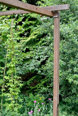 oude druif verplaatsen pergola maken van azobe palen voor druif en klimplanten