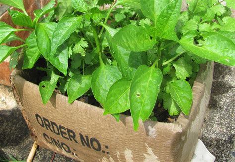 growing herbs frugal gardening 5 thrifty recycling ideas the micro