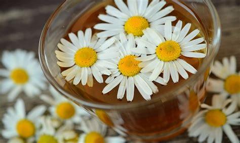 alimentazione con cistite cistite cause e rimedi naturali per sentirsi meglio