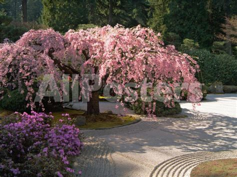 stylish home design ideas japanese garden cherry blossom