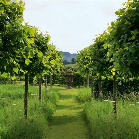 Garden Tree Tree Lined Garden Pathway Gardens Inspiration And