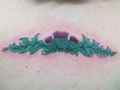 scottish tattoos designs scottish thistles tattoos designs scottish thistles