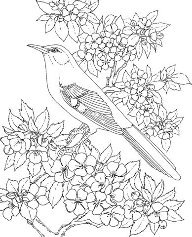 mockingbird coloring pages arkansas mockingbird and apple blossom coloring page