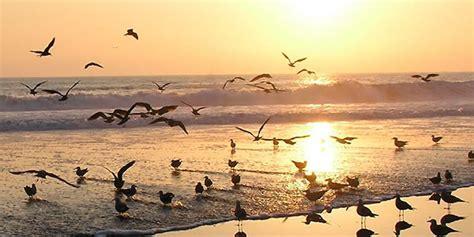 Fotos D Pollas Chiquita | mar chiquita lagoon sole fishing in argentina