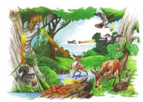 imagenes de animales y plantas de la selva los petis cienc naturales