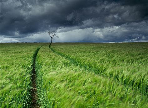 Lone Tree Fife Scotland Graham Chalmers Landscape Lone Landscaping