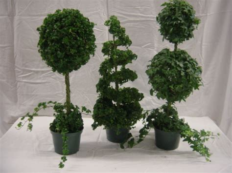 the emerald leaf wholesale greenhouse quality indoor