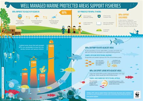 getting to the point services europa buffalo marine protected areas smart investments in health
