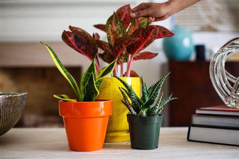indoor plants  bring    cnet