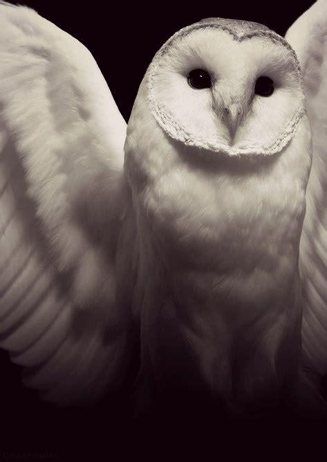 owl symbolism pure spirit white owl symbolism tania marie s blog