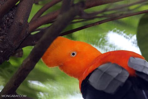 animals and plants that live in the tropical rainforest 10 rainforest facts for 2017